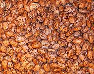 Frijoles pintos ayudan a bajar el colesterol