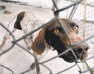 Aumenta el maltrato a mascotas en México