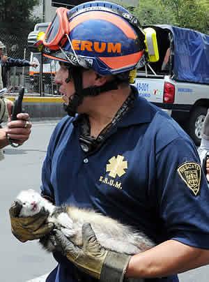 Policía del DF rescata a hurón de incendio en departamento