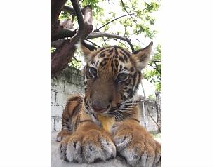 Camboya abre zoo con animales decomisados