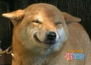 Video: Perro que sonríe toda una sensación en la red
