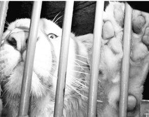 70% de zoológicos opera en la ilegalidad: Profepa