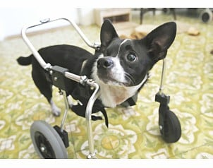 Aprende a hacer un 39 carrito 39 para perros taringa for Carritos para perros