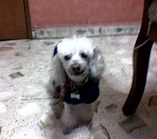 Hombre que ató hocico a su perrita irá a la cárcel | Blog de los Animales Skippy_nota