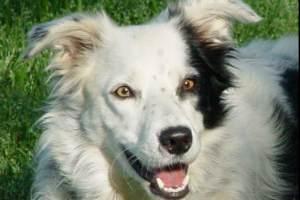 Hombre que ató hocico a su perrita irá a la cárcel | Blog de los Animales - Página 2 Chaster_nota