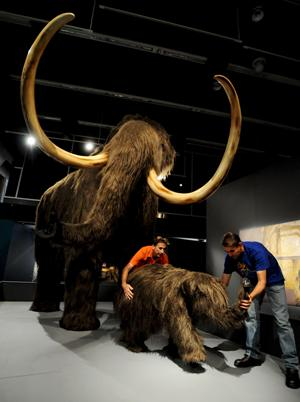 Ya falta menos para Jurassic park y los mamuts 00mamut145