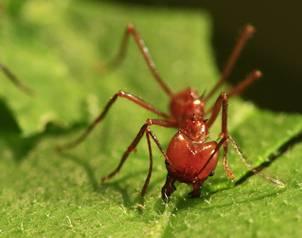 El universal usan hormigas contra plagas en plantas - Plaga hormigas en casa ...