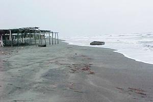 Localizan miles de crustáceos muertos en Perú Peruplayapik