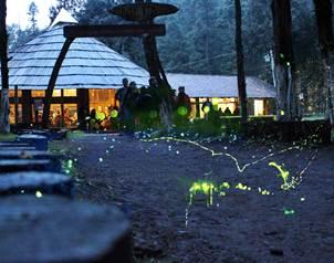 El universal caminata en el bosque de las luci rnagas for Espectaculo de luciernagas en tlaxcala