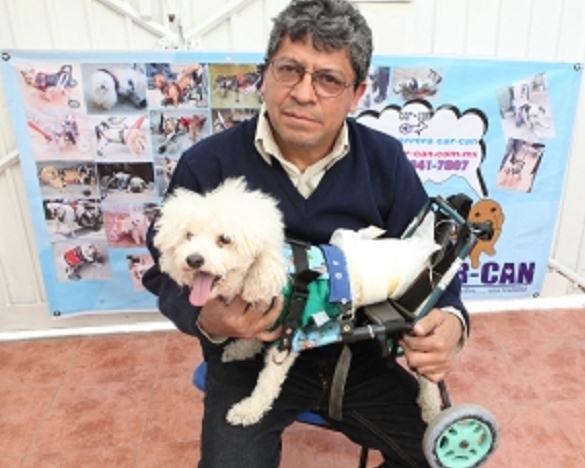 El universal contra la muerte sillas para perros for Sillas para perros