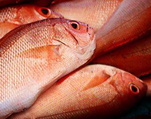 Desde comienzo del a�o, la venta de productos de mar ha ca�do en 20 por ciento