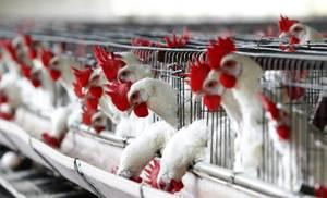 Se llevar� a cabo la verificaci�n de las instalaciones de incubaci�n de huevo para aves de engorda.