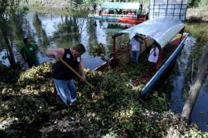 El universal df xochimilco invertir 2 mdp para - Trabajos de limpieza en casas particulares ...