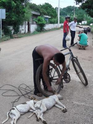 El hombre fue visto cuando ten�a atados del cuello con una soga a los animales y los arrastraba por
