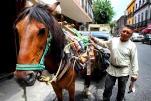 La nueva norma se aprueba tras una serie de protestas de las ONG protectoras de animales por el fall