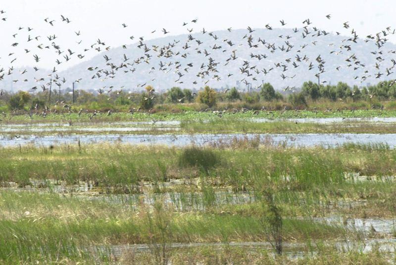 Luege rechaza construcción de aeropuerto en Texcoco