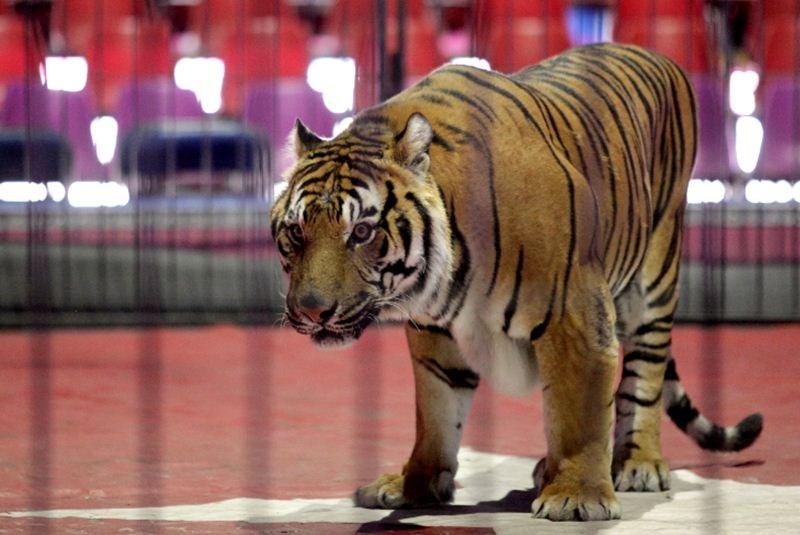 Discuten en San Lázaro prohibir animales en circos