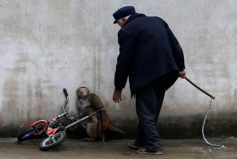 Foto de animales monos 50