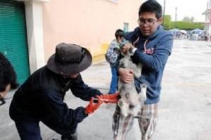 Alistan jornada de esterilización de perros callejeros