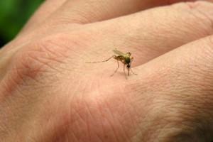 11 cosas que tienes que saber del chikunguña