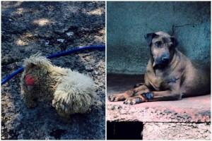 Raúl Julia pugna ante GDF por refugio canino