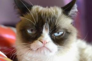 """Mirar videos de """"lindos gatitos"""" aumenta la felicidad"""